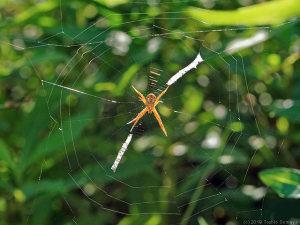 小さな蜘蛛も超ヒマ