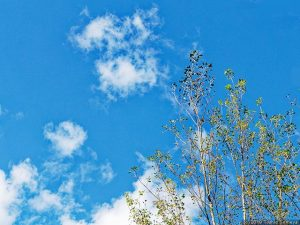 冬姿への変身を急ぐ木