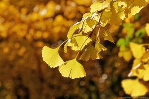 黄色系の紅葉