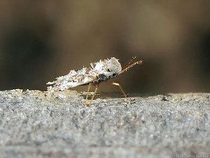 正体不明のチビ昆虫