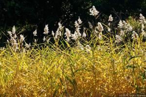 変貌著しい水草の群落