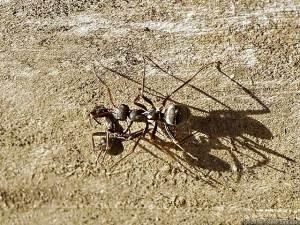 アリのレスキュー