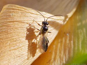日向ぼっこ中の小さなハチ