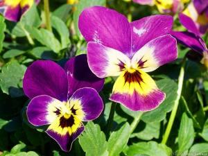 怒り顔の花