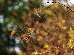 ボロボロに壊れた蜘蛛の網