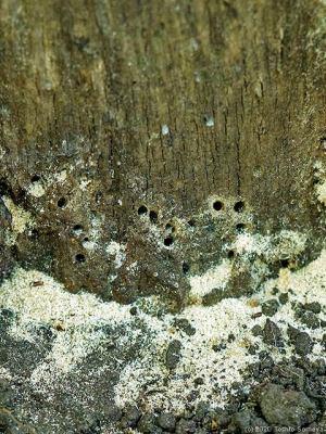 木の幹にドリルであけた様な穴が!・・