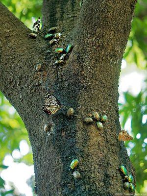 樹液に集まる昆虫たち