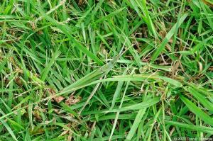 草むらにデカブツが・・