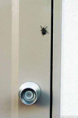 ドアに珍客が・・
