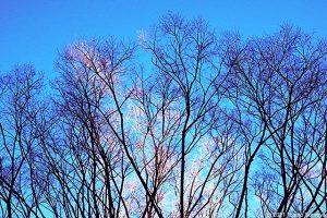 冬木立を眺める