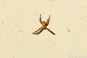 日向ぼっこ中の小さな蜘蛛
