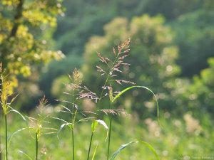 10/10に撮影の秋の草