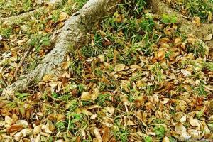落葉樹の樹下で・・