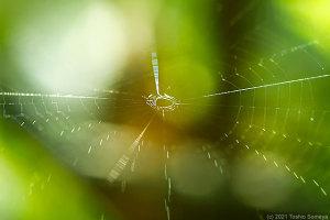 小さな蜘蛛の網