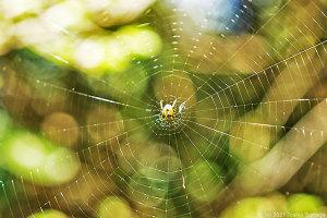 繊細な網を張った小さな蜘蛛