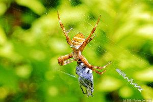 網を張る蜘蛛も登場中!