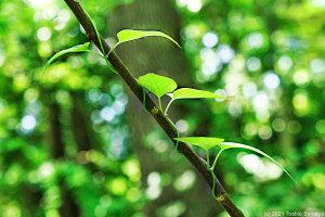 鮮やかな緑の中で・・
