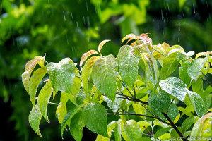恵みの雨が・・