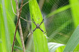蜘蛛の網も手慣れた造りに・・