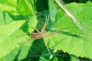 日向で待機する蜘蛛