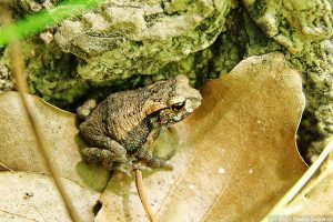 木立の中で目にした小さなカエル