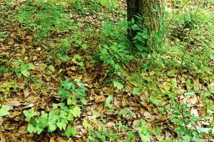 幼木がびっしり生えた場所