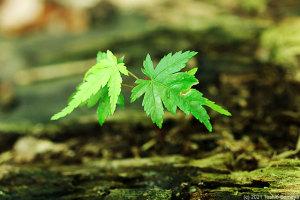 雨の恵みを受けて元気倍増の幼木