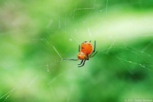 獲物待ち受け中の小さな蜘蛛