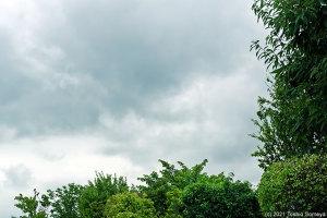 鬱陶しい雨空が・・