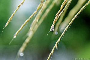 降り続く雨に・・