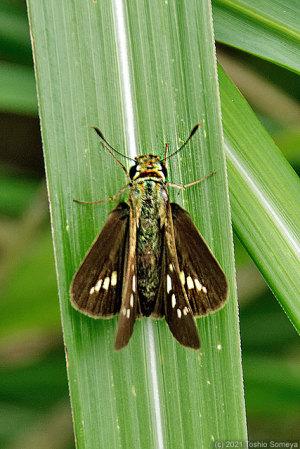 蝶か蛾か?・・