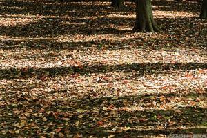 秋の斜光の・・